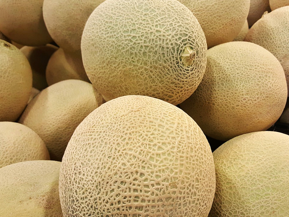 Melon Sense How To Choose The Best Cantaloupe The Grapevine For each type of cantaloupe, they have their own ripeness indicators, so it is important to know the how to determine ripeness: melon sense how to choose the best